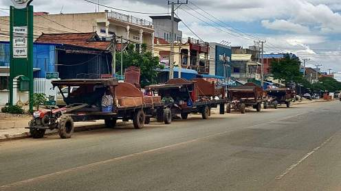 The work horses of Cambodia, they are everywhere moving these enormous beds.